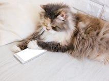 Gato mullido que juega con smartphone Imagen de archivo libre de regalías