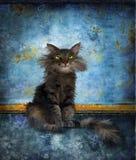 Gato mullido que se sienta con los ojos verdes Fotografía de archivo libre de regalías