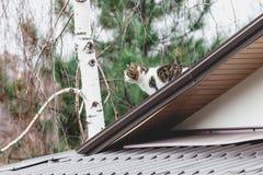 Gato mullido que se sienta en el tejado gris moderno Fotografía de archivo
