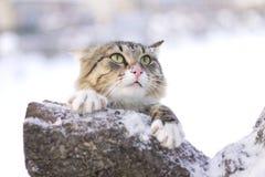 Gato mullido que se sienta en una rama de árbol en invierno Fotografía de archivo libre de regalías