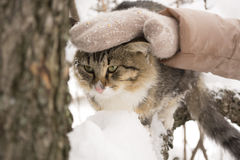 Gato mullido que se sienta en una rama de árbol en invierno Imagen de archivo