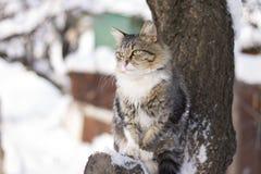 Gato mullido que se sienta en una rama de árbol en invierno Fotos de archivo