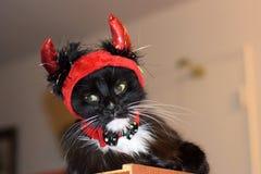 Gato mullido triste del diablo Imágenes de archivo libres de regalías