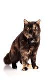 Gato multicolor imagenes de archivo