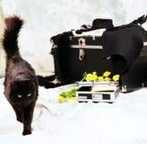 Gato muy hermoso Fotografía de archivo libre de regalías
