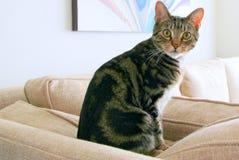 Gato muy hermoso Fotos de archivo