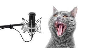 Gato muy ruidosamente del canto Fotos de archivo