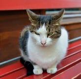 Gato não feliz da rua Imagem de Stock Royalty Free