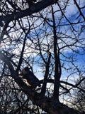 Gato na árvore fotografia de stock royalty free