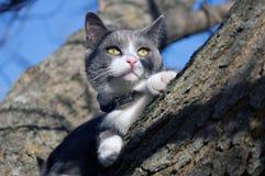 Gato na árvore Fotografia de Stock