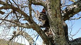 Gato na árvore Imagem de Stock