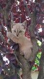 Gato na árvore 3 Fotografia de Stock