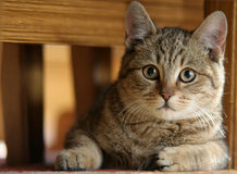 Gato na cadeira foto de stock