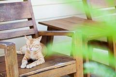 Gato na cadeira do braço Imagem de Stock Royalty Free