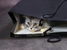 Gato na caixa fotos de stock