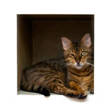 Gato na caixa Imagens de Stock