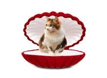 Gato na caixa vermelha Imagem de Stock Royalty Free