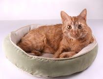 Gato na cama Imagem de Stock Royalty Free