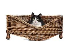 Gato na cama de vime Fotos de Stock Royalty Free