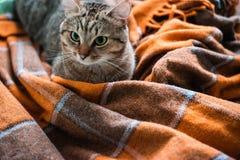 Gato na cama fotografia de stock royalty free