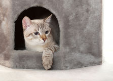 Gato na casa. Imagem de Stock