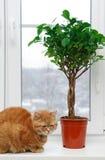 Gato na casa Fotografia de Stock Royalty Free