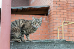 Gato na cerca Fotografia de Stock