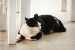Gato na cidade Imagens de Stock