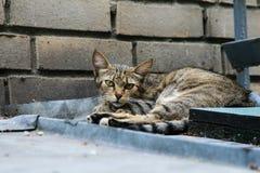Gato na cidade Foto de Stock Royalty Free