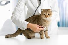 Gato na clínica veterinária Foto de Stock Royalty Free