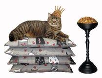 Gato na coroa perto da alimentação seca foto de stock royalty free