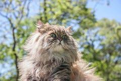 Gato na floresta Fotos de Stock Royalty Free