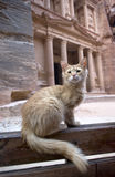 Gato na frente das ruínas de Al Khazneh Treasury, PETRA, Jordânia Imagem de Stock