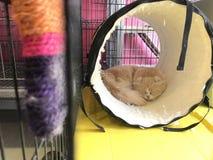 Gato na gaiola foto de stock royalty free