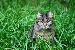 Gato na grama Imagem de Stock