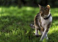 Gato na grama Imagens de Stock