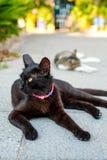 Gato na ilha de Santorini, Oia, Grécia Imagem de Stock