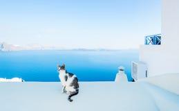 Gato na ilha de Santorini, Oia, Grécia Imagens de Stock