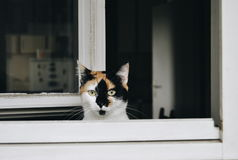 Gato na janela Fotos de Stock