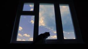 Gato na janela Nuvens da vista em um céu azul filme