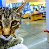 Gato na loja Imagem de Stock