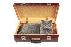 Gato na mala de viagem velha do vintage Imagens de Stock