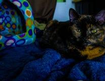 Gato na montanha azul foto de stock royalty free