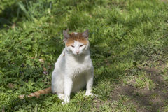 Gato na natureza Fotografia de Stock