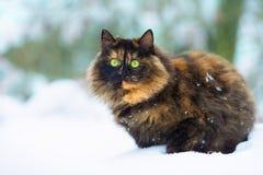 Gato na neve imagens de stock royalty free