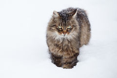 Gato na neve durante a queda de neve fotografia de stock