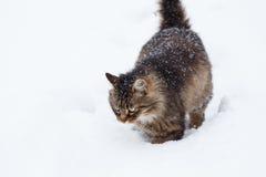 Gato na neve durante a queda de neve foto de stock royalty free