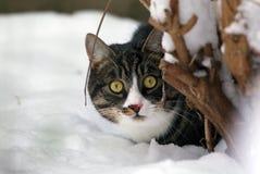 Gato na neve, escondendo atrás de uma árvore Fotografia de Stock