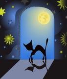 Gato na noite Foto de Stock Royalty Free