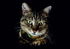 Gato na obscuridade Foto de Stock